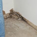 Mold in your rental?  What Now?