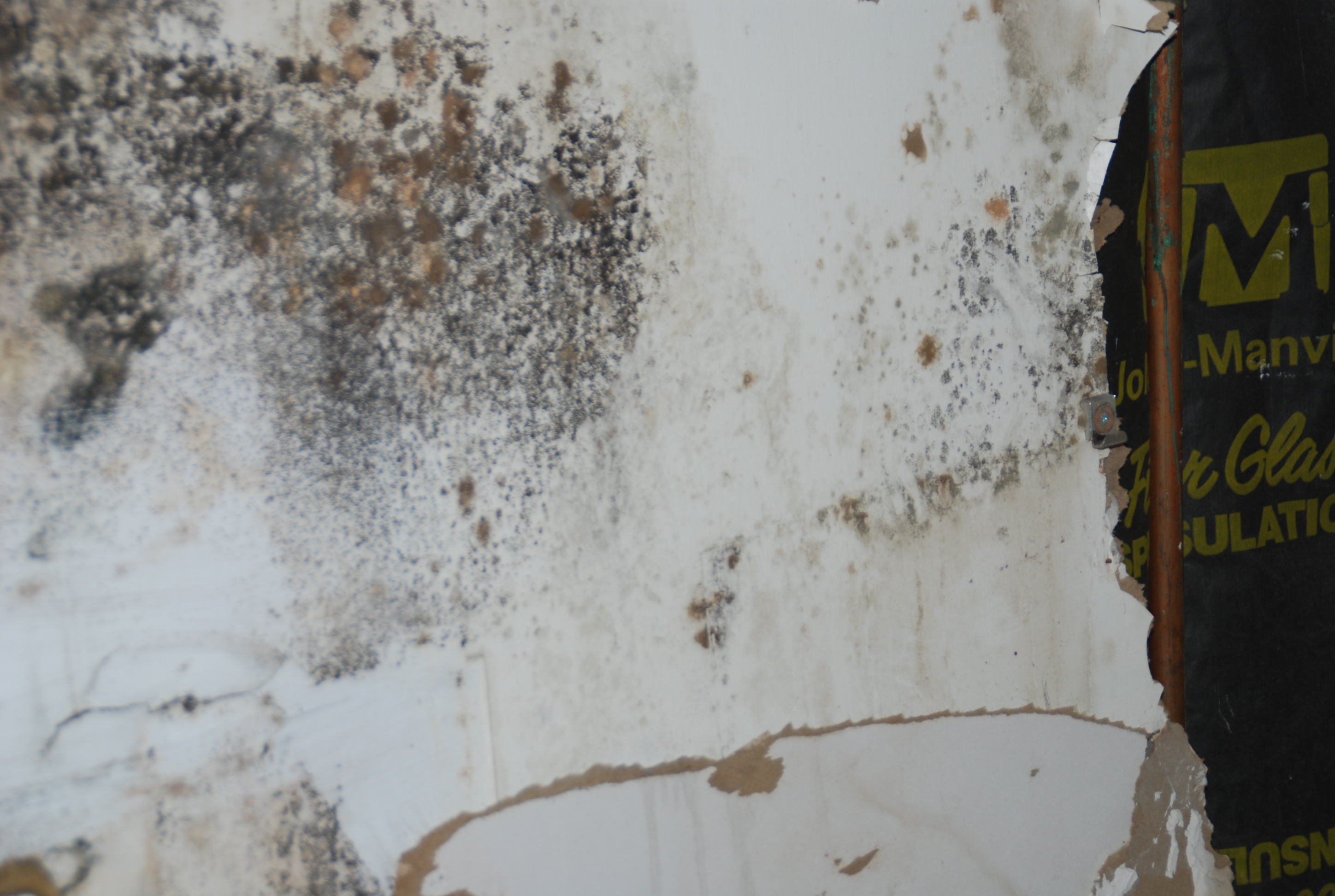 Mold in your home?  Now what to do?