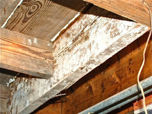 What's in your crawlspace?