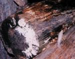 Mold-Log-e1322674195117