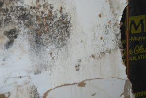 mold inspection remediation